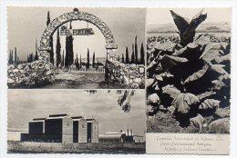 Uruguay Agriculture Tobacco Plant Advertising Factory RPPC Original Ca1940 Postcard AK  Carte Postale W4-285 - Culturas