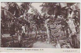 GUINEE FRANCAISE . UN REGIME DE BANANES . Fernand NATHAN . F.N.
