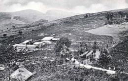 CEYLON - Tea Estate - Sri Lanka (Ceylon)