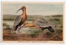 Stunning Bird La Plata Natural History Museum Tarjeta Postal Argentina  Ca1900 Postcard  W4-317 - Pájaros