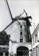 HEKELGEM Bij Affligem (Vlaams-Brabant) - Molen/moulin - Historische Opname Van Molen De Vis In Verval (ca. 1950). - Affligem
