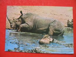 White Rhino - Simbabwe