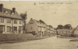 "Boitsfort - Cité Jardin "" Le Logis "" - Rue Des Ibis - 1933 ( Voir Verso ) - Watermael-Boitsfort - Watermaal-Bosvoorde"