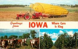 CPSM Greetings From Iowa  L1703 - Etats-Unis