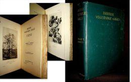 """""""BRITISH VEGETABLE GALLS"""" Arboriculture Agriculture Maladie Arbre Plante Botanique Plant Tree England Angleterre 1901 ! - Sciences Biologiques"""