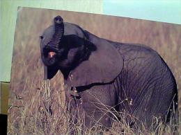 ELEFANTE ELEPHANT  AFICA   N1975 EM8570 - Elefantes