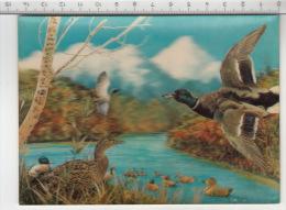 Wild Ducks - 3D - Cartes Stéréoscopiques