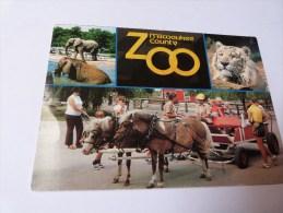 ZOO MILWAUKEE . WISCONSIN.  TIGRE ELEPHANT. - Milwaukee