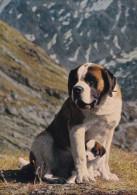 """""""LE CHIEN BARRY ET SON PETIT CHIOT"""" (dil85) - Dogs"""