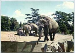 Lyon (69) - Parc De La Tête D´Or - Les Éléphants - Lyon
