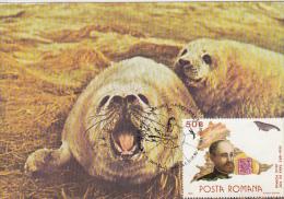84-HARBOUR SEAL, ANTARCTIC FAUNA, CARTES MAXIMUM, CM, MAXICARD, 1990, ROMANIA - Antarctic Wildlife