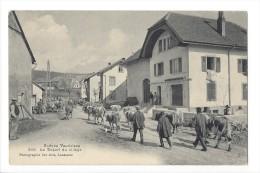 LV1697 - Scènes Vaudoises Départ Du Village Troupeau De Vaches Aux Charbonnières - VD Vaud