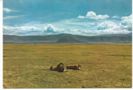 Lions In Ngorongoro Crater, Tanzania - Lions