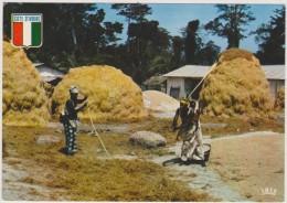 COTE D´IVOIRE,afrique,africa,colonie Frrançaise Depuis 1893,indépendant Maintenant,metier,job,battage Du Riz,paysan - Côte-d'Ivoire