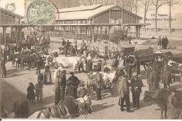 37 - TOURS,  MARCHE AUX BESTIAUX (ECRITE 1905) - Tours