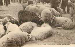 Dép 65  ?- Animaux - Types Pyrénéens - Brebis Des Pyrénées - Sur Une Foire Ou Un Marché - A Identifier -bon état Général - Francia