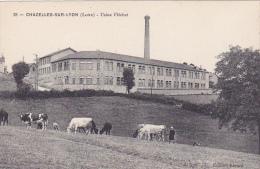 Cpa-42-chazelles Sur Lyon-personnage-vaches-usine Flechet-edi Ebrard N°18 - France