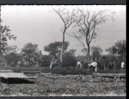 DAHOMEY - MONASTERE CISTERCIEN - L´ETOILE NOTRE DAME - PARAKOU - LE JARDIN DU MARIGOT - Dahomey