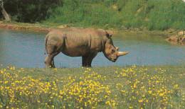 RHINOCEROS BLANC - Rhinocéros