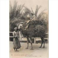 ADFN1050-LFTD4101TTSC.Mar Oc .Morocco.TARJETA DE EGIPTO.Transporte En Camello - Postales