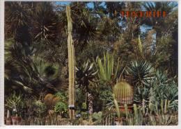 TENERIFE - PUERTO DE LA CRUZ, Jardin Botanico,   Kakteen, Cactus - Cactusses