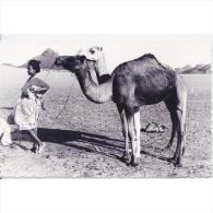 AFDNTP1055D-LFTD11343TESSC.TARJETA DE MARRUECOS.Camello En El Desierdo De EL AIUM - Marruecos