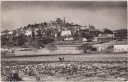 Var,GRIMAUD ,village Médiéval,un Nid Au Coeur Des Maures,vue Des Terres ,vignes ,avant L´arrivée Du Béton,83 - Draguignan