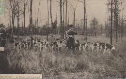 Chasse à Courre   CHANTILLY  - La Meute Avant L'attaque - Hunting