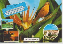 (AN174) GRAN CANARIA. BIRD. OISEAUX - Pájaros