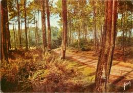 CPSM Forêt Landaise    L1706 - Non Classés