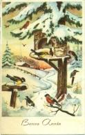 Bonne Année - Vogels - Nouvel An