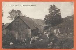 JAE-20  Le Salève, Chalet De La Thuile, Lathuile, Troupeau De Vaches. Cachet 1919 Pour Genève. - Other Municipalities