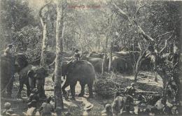 ELEPHANTS IN KRAAL - Sri Lanka (Ceylon)