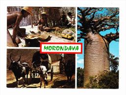 Republique Malagasy Environs De Morondava Scenes De Villade De Pecheurs Baobab - Madagascar
