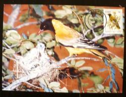CISKEI Oiseaux, Yvert 51 Sur Carte Maximum. FDC, Emis En 1984 - Ohne Zuordnung