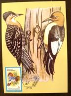 ROUMANIE Oiseaux () Carte Maximum. FDC, Emis En 1992(12) - Climbing Birds