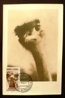 SAHARA ESPAGNOL Oiseaux. Yvert 85.  Carte Maximum, FDC, Emis En 1957 - Straussen- Und Laufvögel