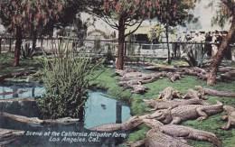 Scene At The California Alligator Farm Los Angeles California