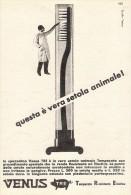 # SPAZZOLINO VENUS TRE 1950s Advert Pubblicità Publicitè Reklame Toothbrush Zahnburst Oral Dental Healthcare - Attrezzature Mediche E Dentistiche