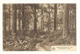 Cp, Belgique, Mont De L'Enclus, Bois,  Voyagée - Mont-de-l'Enclus