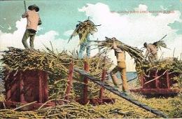 Hawai Hawaii Etats Unis Usa Carte Postale Postcard Loading Sugar Cane A Sucre Ed Island Curios Co. N°186 Neuve BE - Etats-Unis