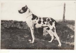 Cpa/pk 1933 Nieuport Nieuwpoort Dog Hond Grand Redan Emeric Dewulf L'Etalon Rolf De Chavigny - Nieuwpoort
