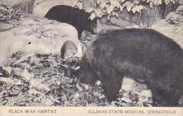 Illinois Springfield Black Bear Habitat Illinois State Museum Ar
