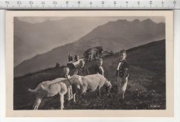 Petits Chevriers / Kleine Ziegenhirten  - Chèvre / Ziege / Goat / Capra - Animaux & Faune