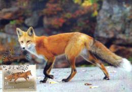 SERBIA 2014 Fauna Fox MC - Serbie