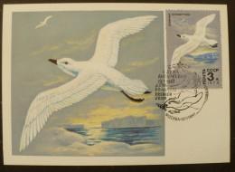URSS-RUSSIE Oiseaux,  Yvert 4499 (petrel) Sur Carte Maximum. FDC, Emis En 1975 - Ohne Zuordnung
