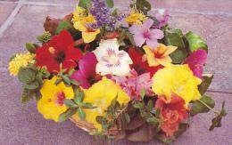 Basket Of Tropical Flowers Antigua West Indies - Antigua & Barbuda