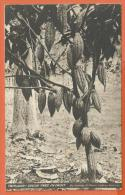 JAA-29  Trinidad  Cocoa Tree In Fruit.  Non Circulé. Traces De Collage Au Dos. - Cuba