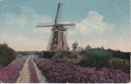 AK Windmühle - Heide - Poststempel Gabel - 1913 (8653) - Windmühlen