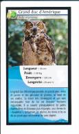 Oiseau - Grand Duc D'Amérique / Hibou / Owl Bird  // IM 126/32 - Non Classificati
